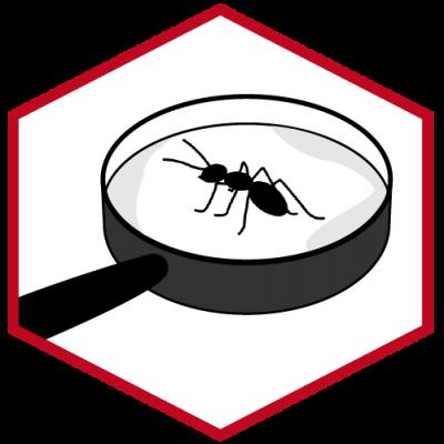 Insektenmonitoring - Permanente Beseitigung und Überwachung von Insekten
